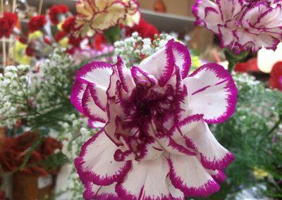 Kvetiny KV prodejna 27