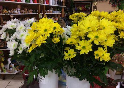 Kvetiny KV prodejna 7