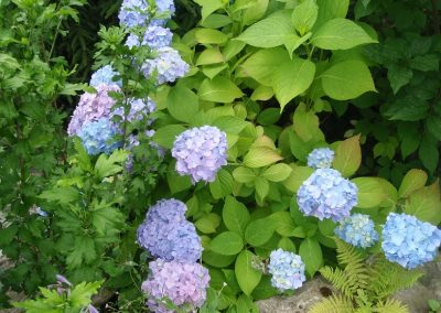 kvetiny karlovy vary 23