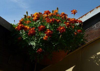 kvetiny kv sezonni nabidka 1