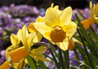 kvetiny kv sezonni nabidka 10