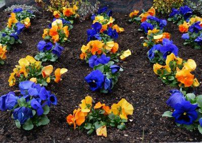 kvetiny kv sezonni nabidka 11