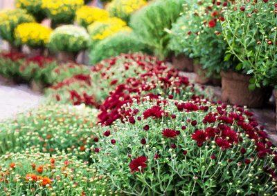 kvetiny kv sezonni nabidka 14