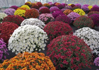 kvetiny kv sezonni nabidka 2