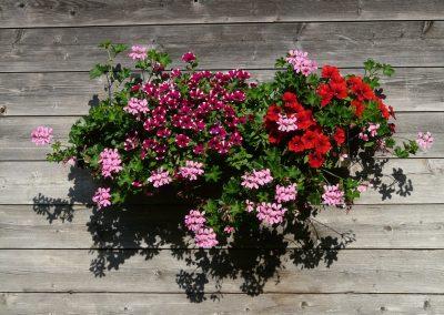 kvetiny kv sezonni nabidka 3