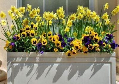 kvetiny kv sezonni nabidka 4
