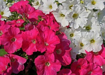 kvetiny kv sezonni nabidka 5