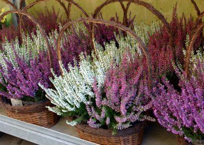 kvetiny kv sezonni nabidka 7