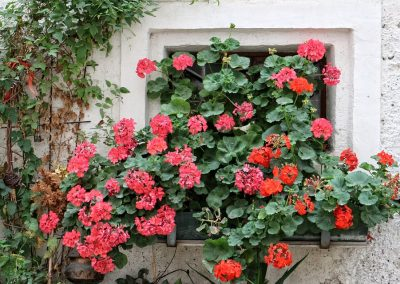 kvetiny kv sezonni nabidka 9