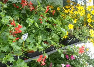 kvetinykv sezonni nabidka 4