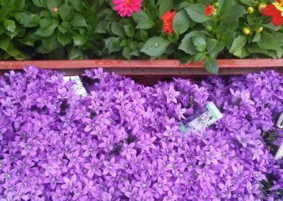 kvetinykv sezonni nabidka